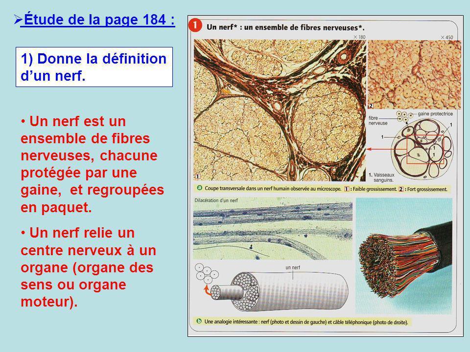 Étude de la page 184 : 1) Donne la définition d'un nerf.