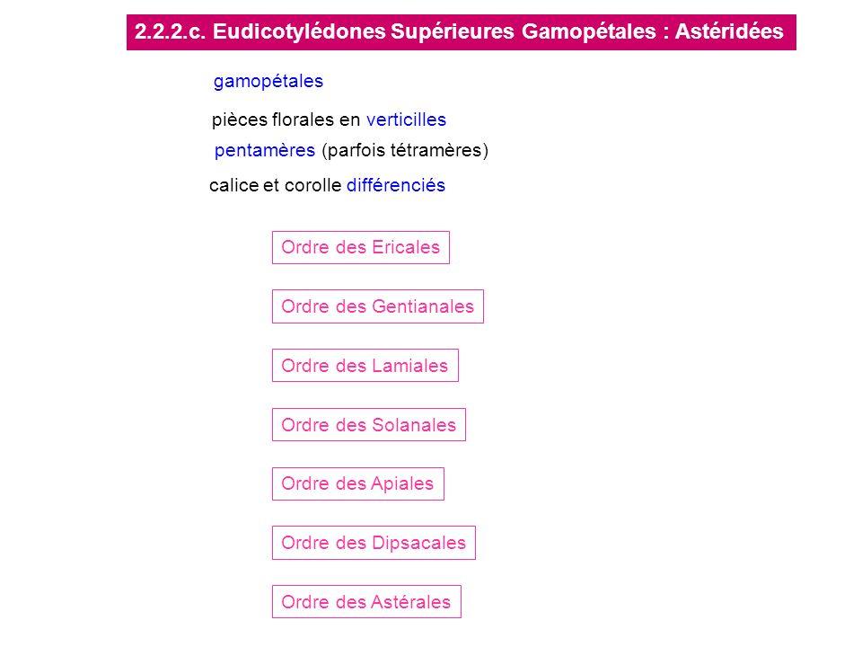 2.2.2.c. Eudicotylédones Supérieures Gamopétales : Astéridées