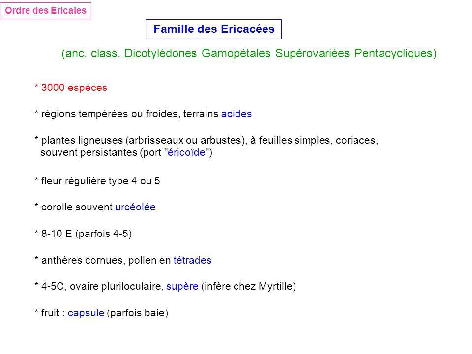 (anc. class. Dicotylédones Gamopétales Supérovariées Pentacycliques)