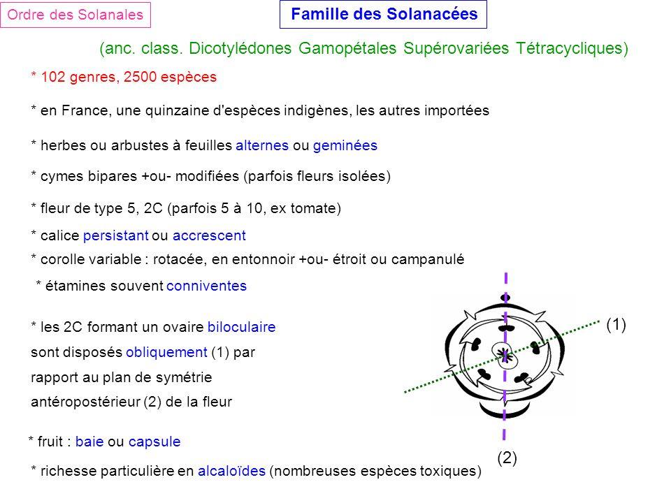Famille des Solanacées