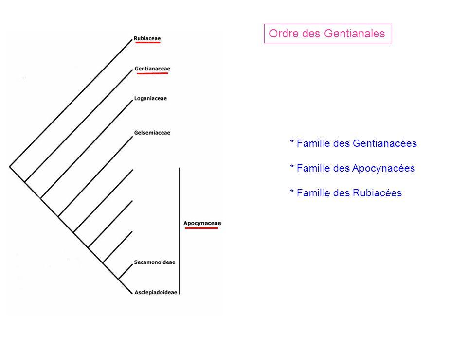 Ordre des Gentianales * Famille des Gentianacées