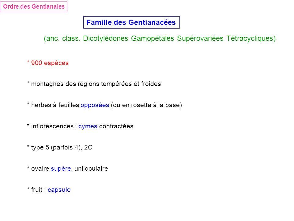 Famille des Gentianacées