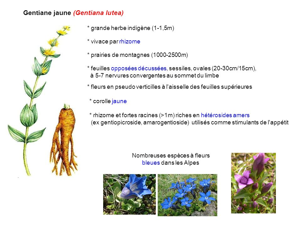 Nombreuses espèces à fleurs