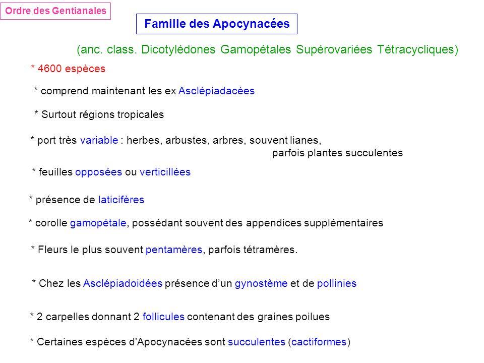 Famille des Apocynacées