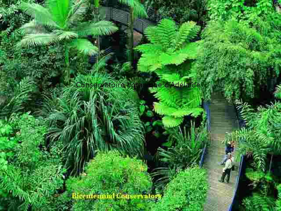 Conservatoire botanique d'Adélaïde