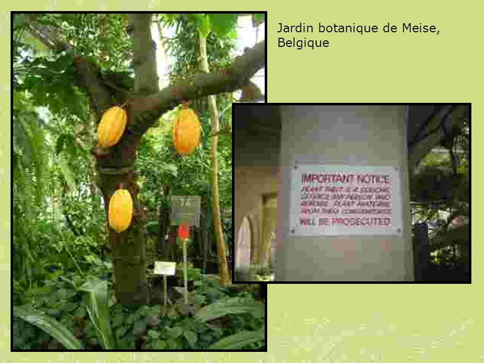 Jardin botanique de Meise, Belgique