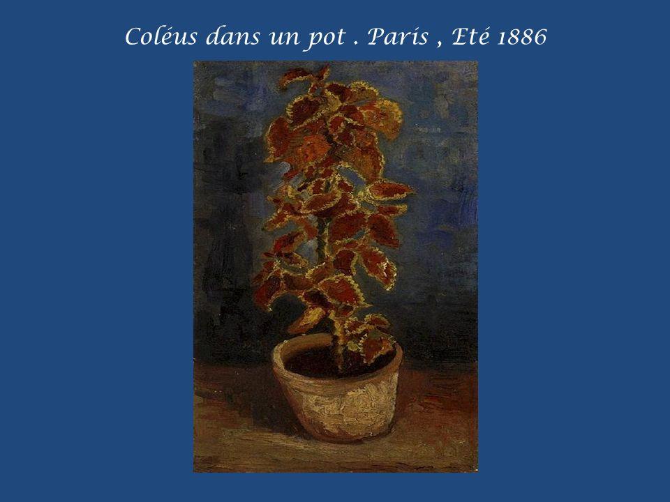 Coléus dans un pot . Paris , Eté 1886