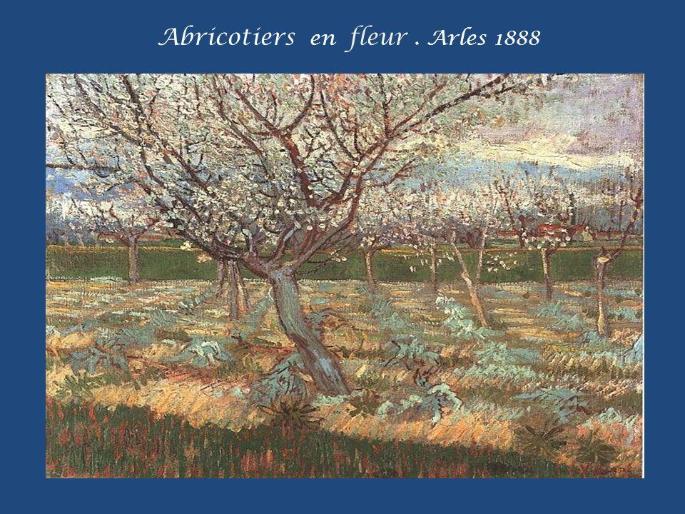 Abricotiers en fleur . Arles 1888