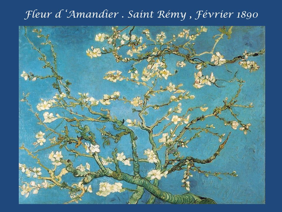 Fleur d 'Amandier . Saint Rémy , Février 1890