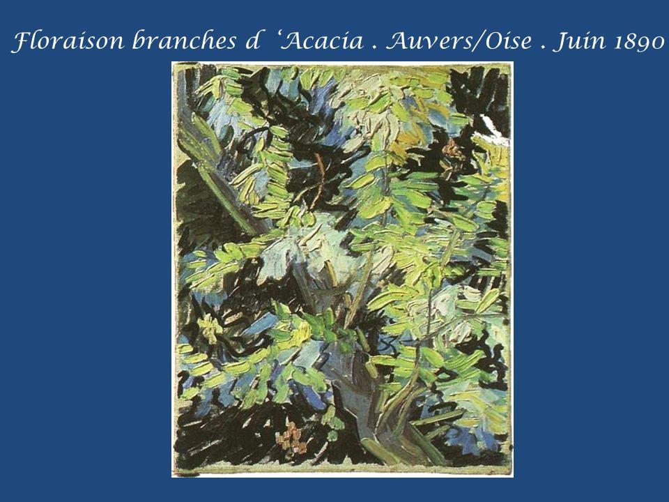 Floraison branches d 'Acacia . Auvers/Oise . Juin 1890