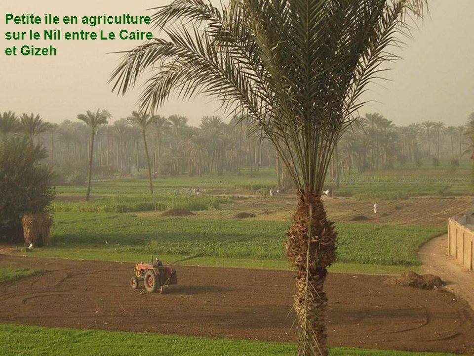 Petite ile en agriculture sur le Nil entre Le Caire et Gizeh