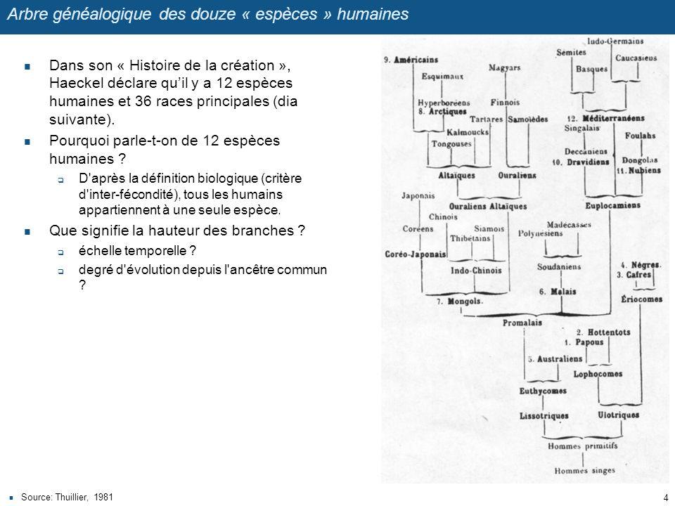 Arbre généalogique des douze « espèces » humaines
