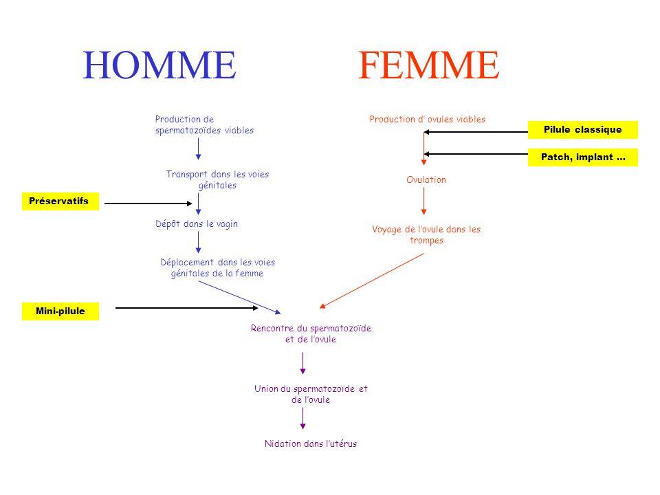 HOMME FEMME Production de spermatozoïdes viables