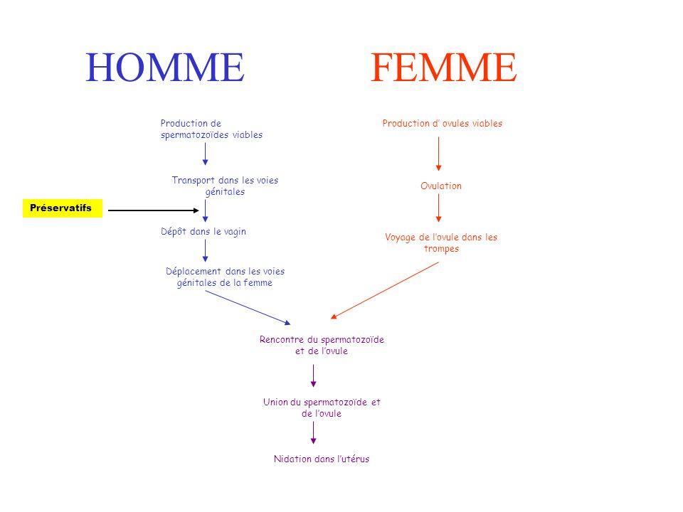 Rencontre spermatozoide ovule combien temps