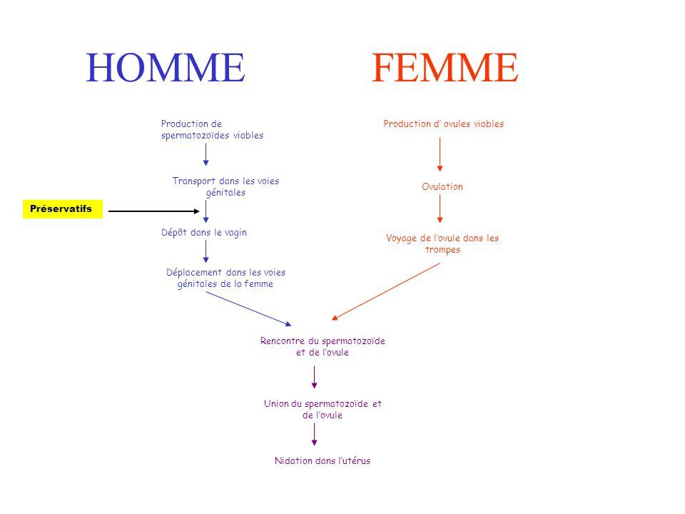 Rencontre spermatozoide ovule