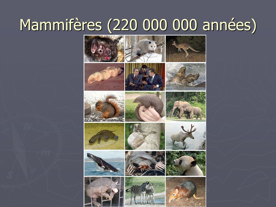 Mammifères (220 000 000 années)