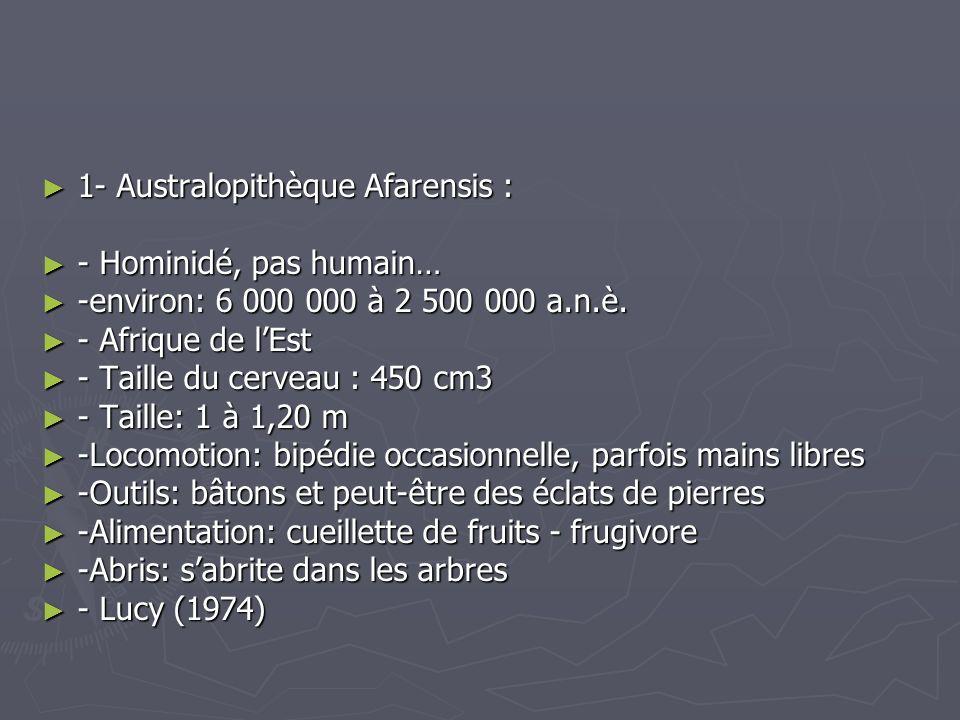 1- Australopithèque Afarensis :