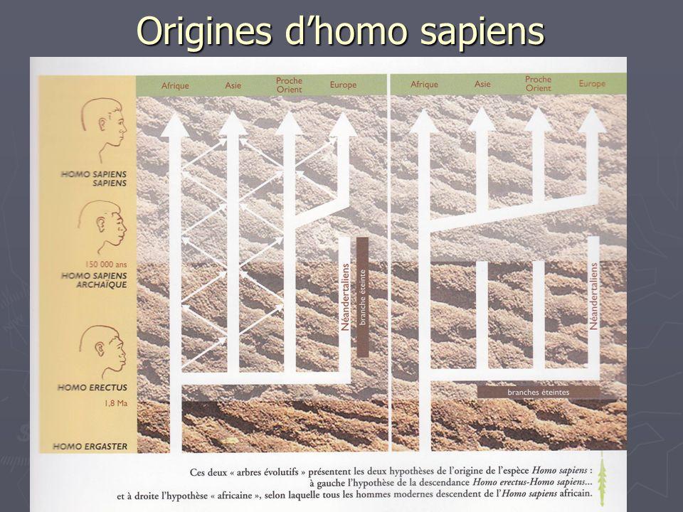 Origines d'homo sapiens