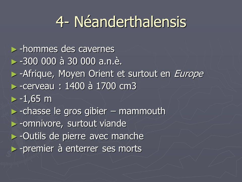 4- Néanderthalensis -hommes des cavernes -300 000 à 30 000 a.n.è.