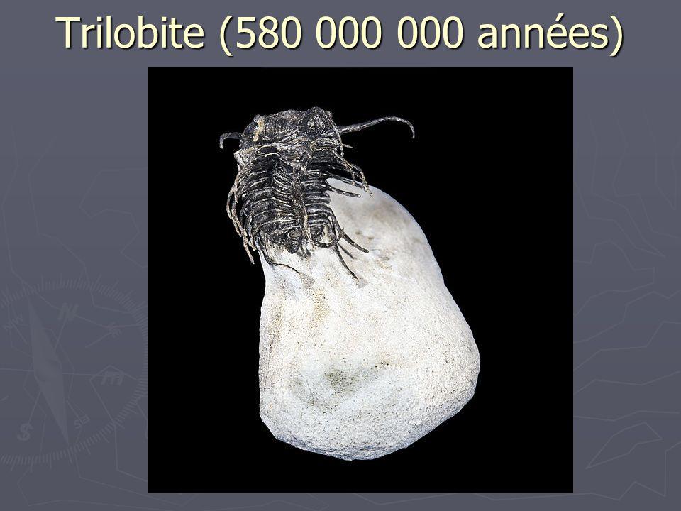 Trilobite (580 000 000 années)