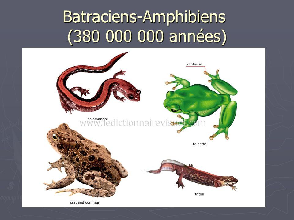 Batraciens-Amphibiens (380 000 000 années)