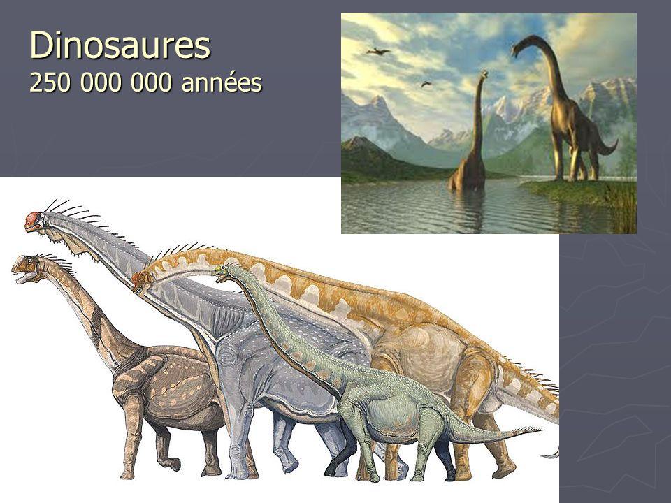Dinosaures 250 000 000 années