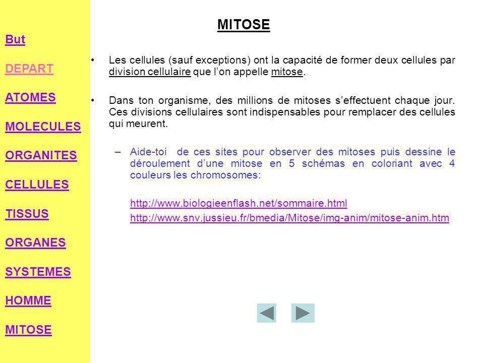 MITOSELes cellules (sauf exceptions) ont la capacité de former deux cellules par division cellulaire que l'on appelle mitose.