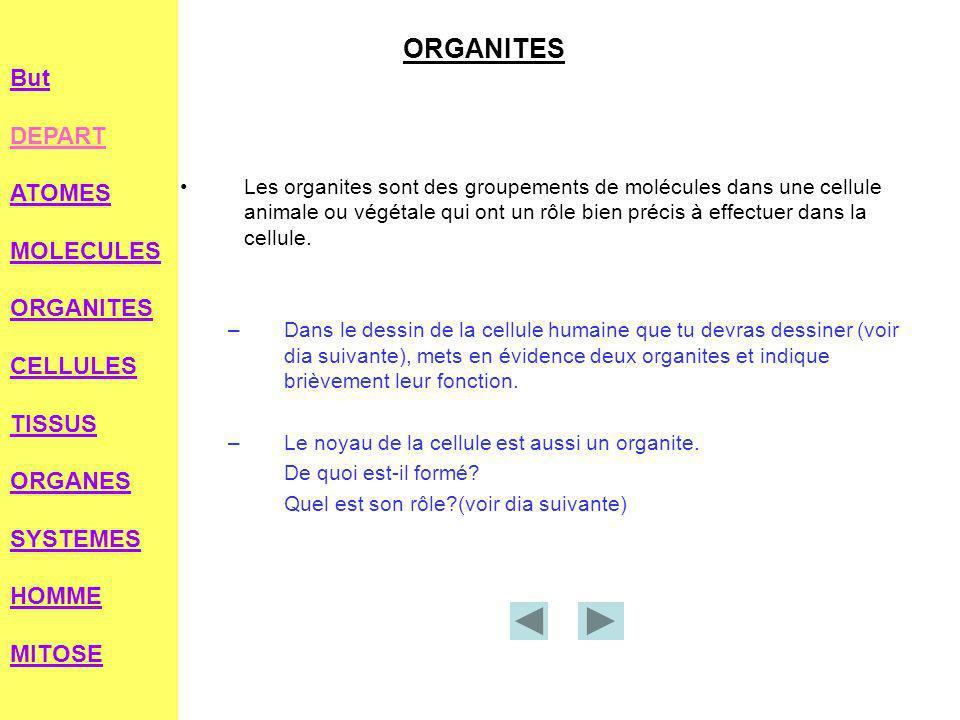 ORGANITES