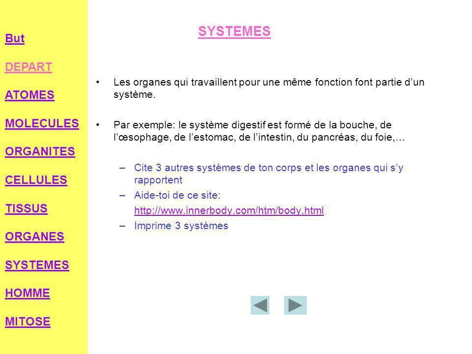 SYSTEMES Les organes qui travaillent pour une même fonction font partie d'un système.