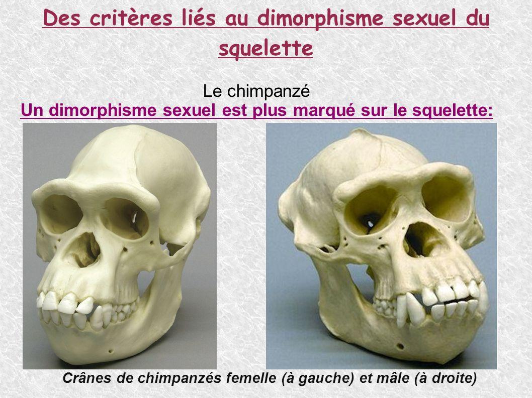 Des critères liés au dimorphisme sexuel du squelette