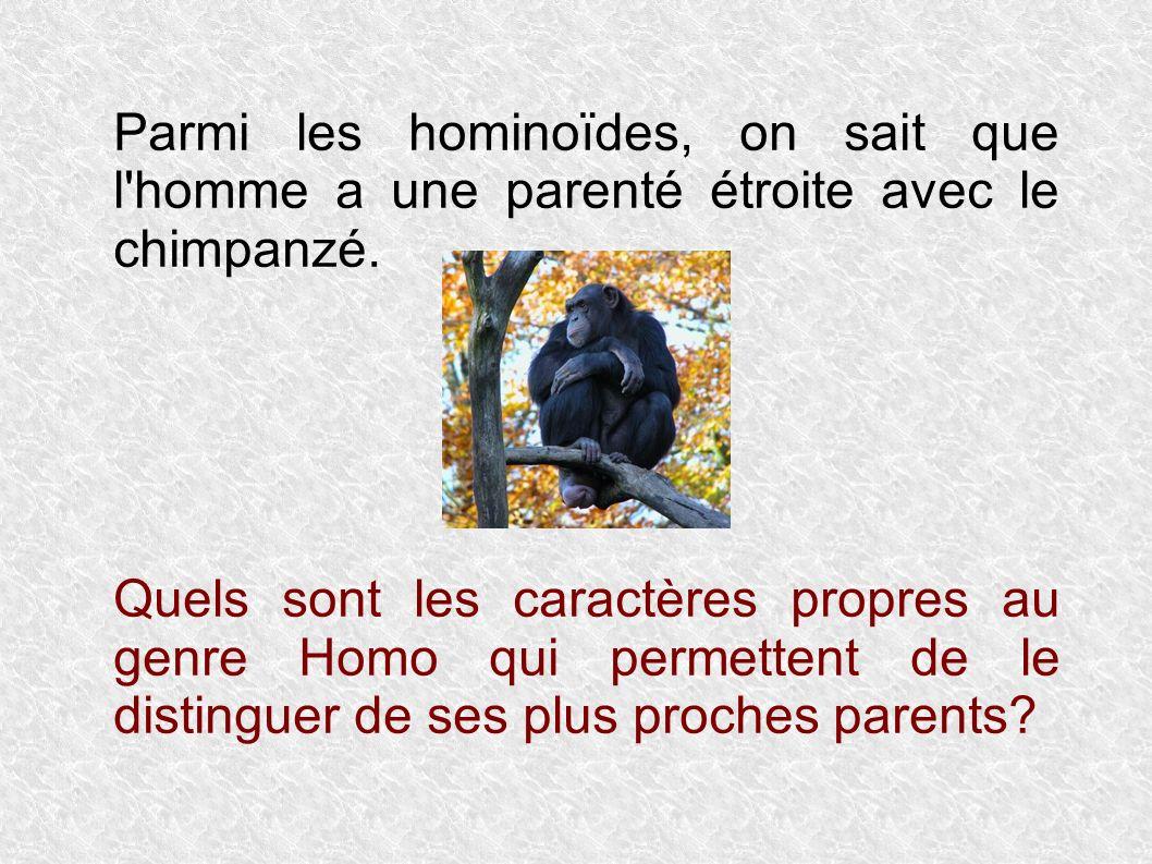 Parmi les hominoïdes, on sait que l homme a une parenté étroite avec le chimpanzé.