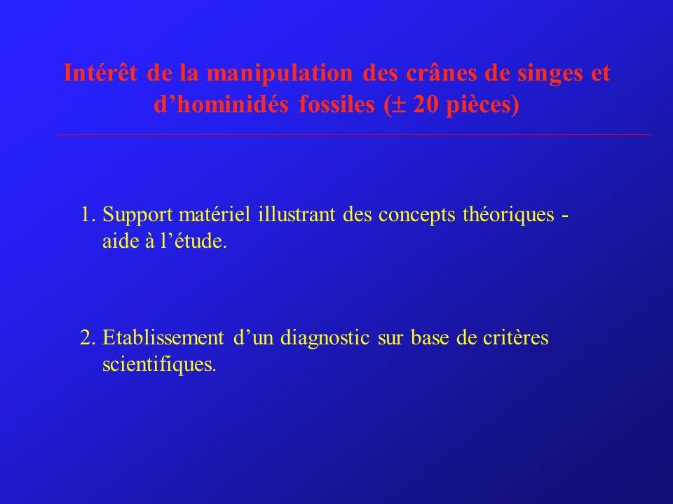 Intérêt de la manipulation des crânes de singes et d'hominidés fossiles ( 20 pièces)