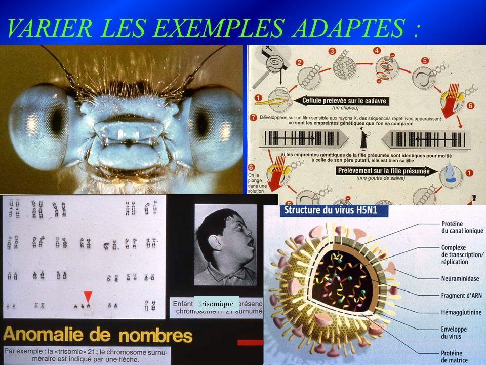 VARIER LES EXEMPLES ADAPTES :