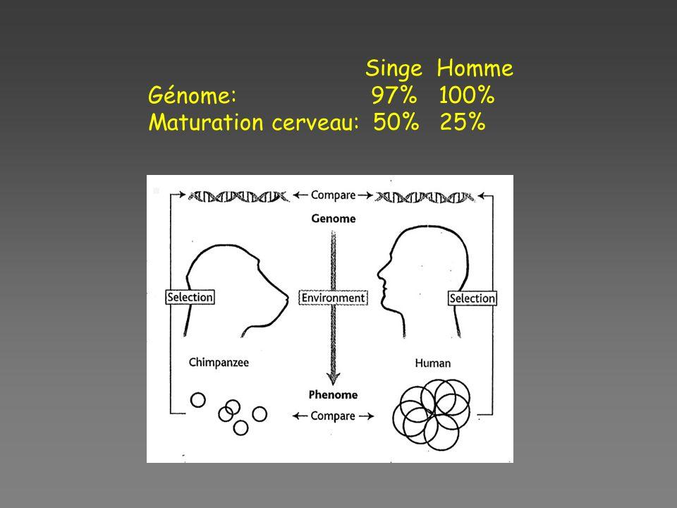 Singe Homme Génome: 97% 100% Maturation cerveau: 50% 25%