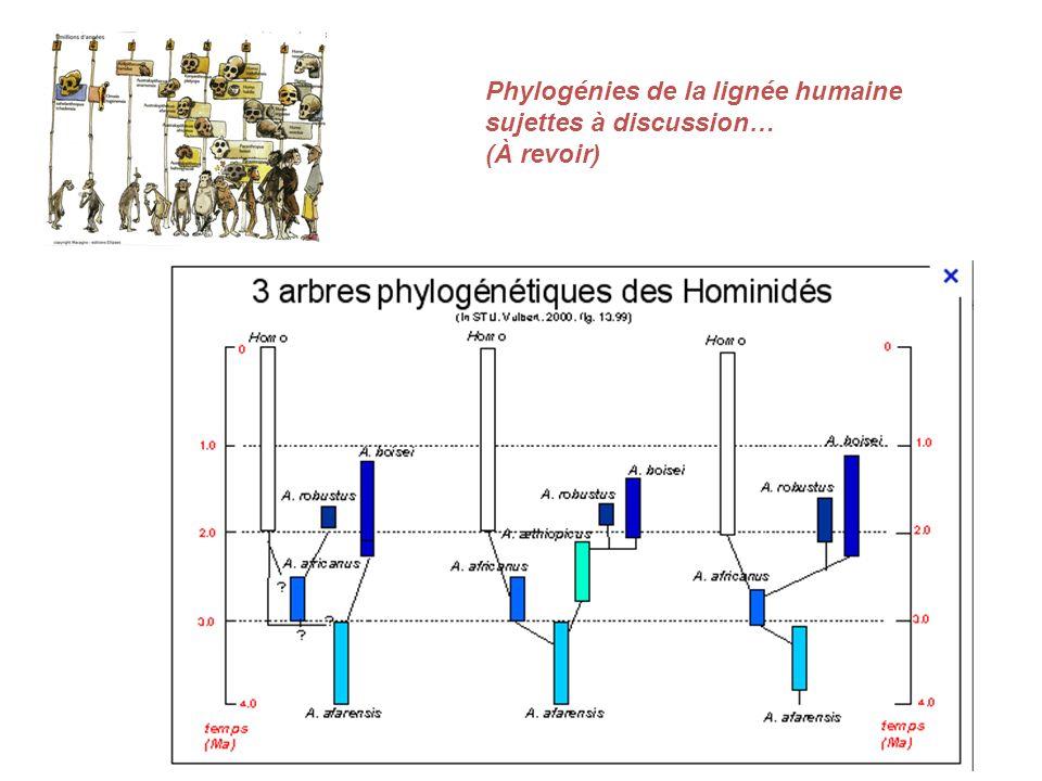 Phylogénies de la lignée humaine