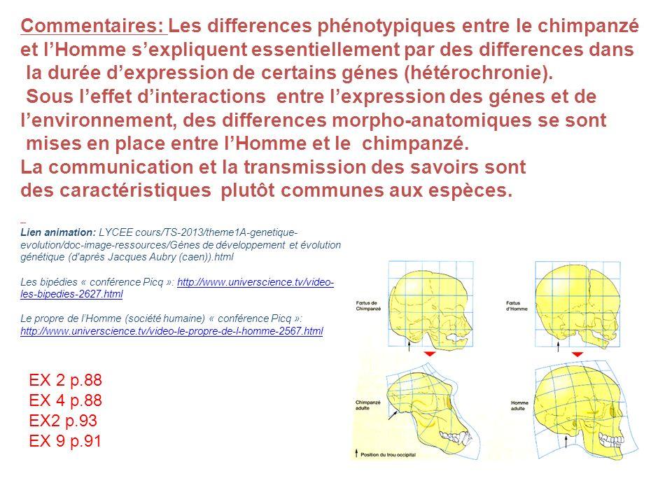 Commentaires: Les differences phénotypiques entre le chimpanzé