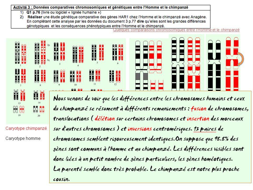 Quelques comparaisons chromosomiques entre l'Homme et le chimpanzé