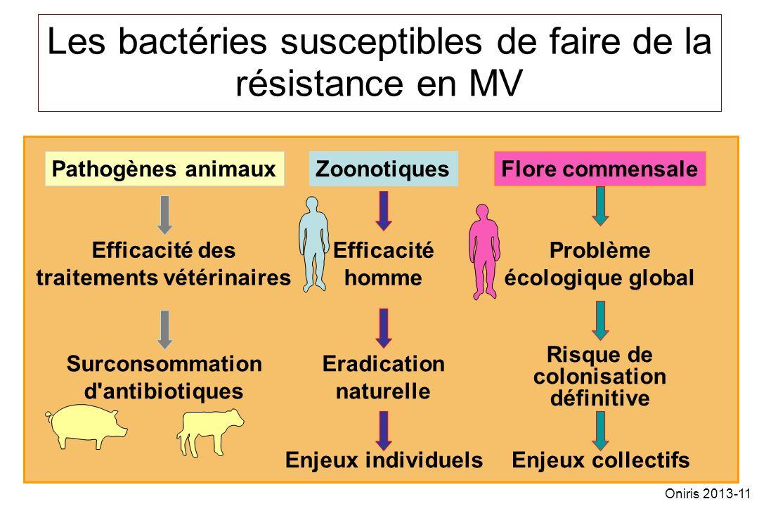 Les bactéries susceptibles de faire de la résistance en MV