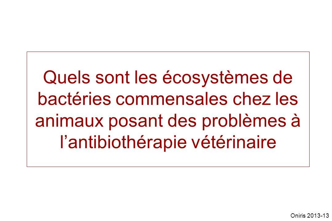 Quels sont les écosystèmes de bactéries commensales chez les animaux posant des problèmes à l'antibiothérapie vétérinaire