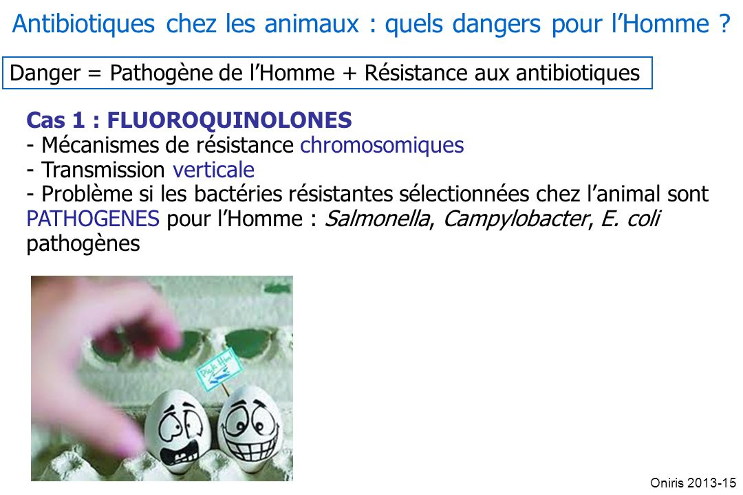 Antibiotiques chez les animaux : quels dangers pour l'Homme