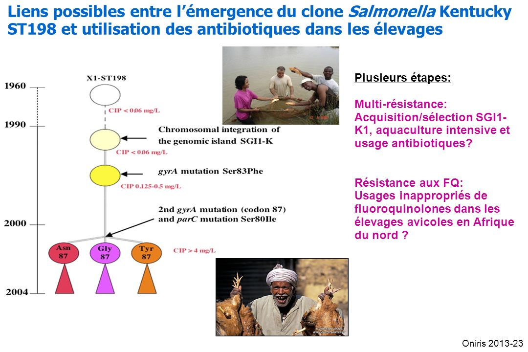 Liens possibles entre l'émergence du clone Salmonella Kentucky ST198 et utilisation des antibiotiques dans les élevages