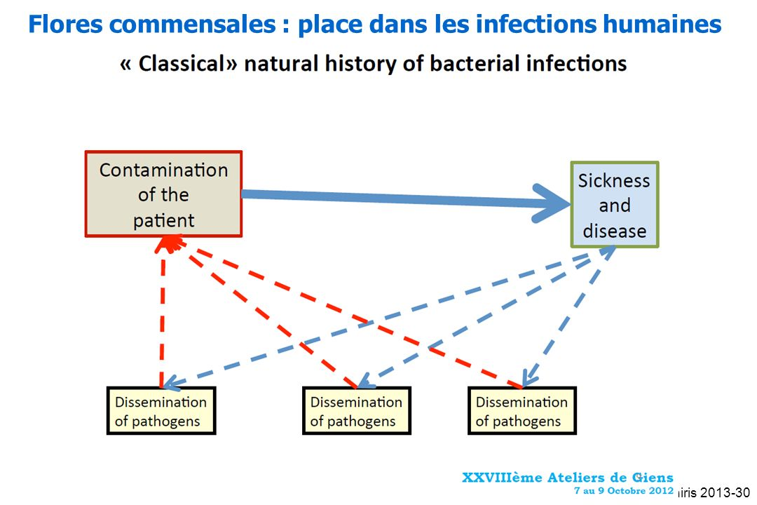 Flores commensales : place dans les infections humaines