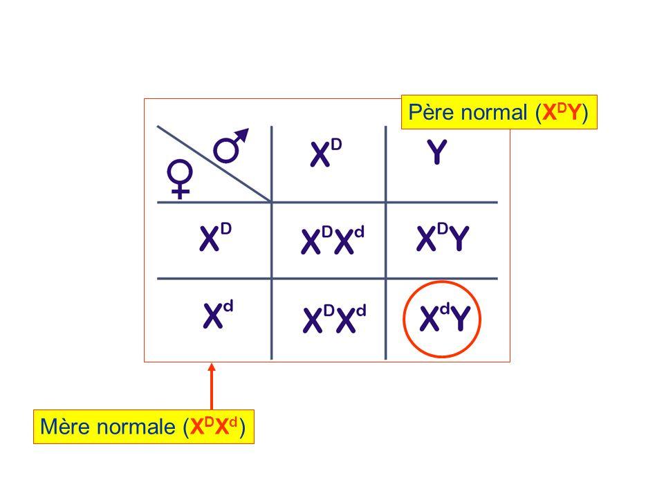 Père normal (XDY) Mère normale (XDXd)