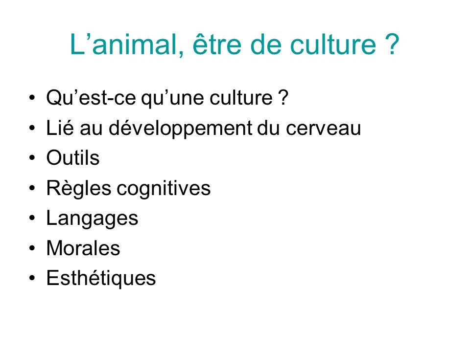 L'animal, être de culture