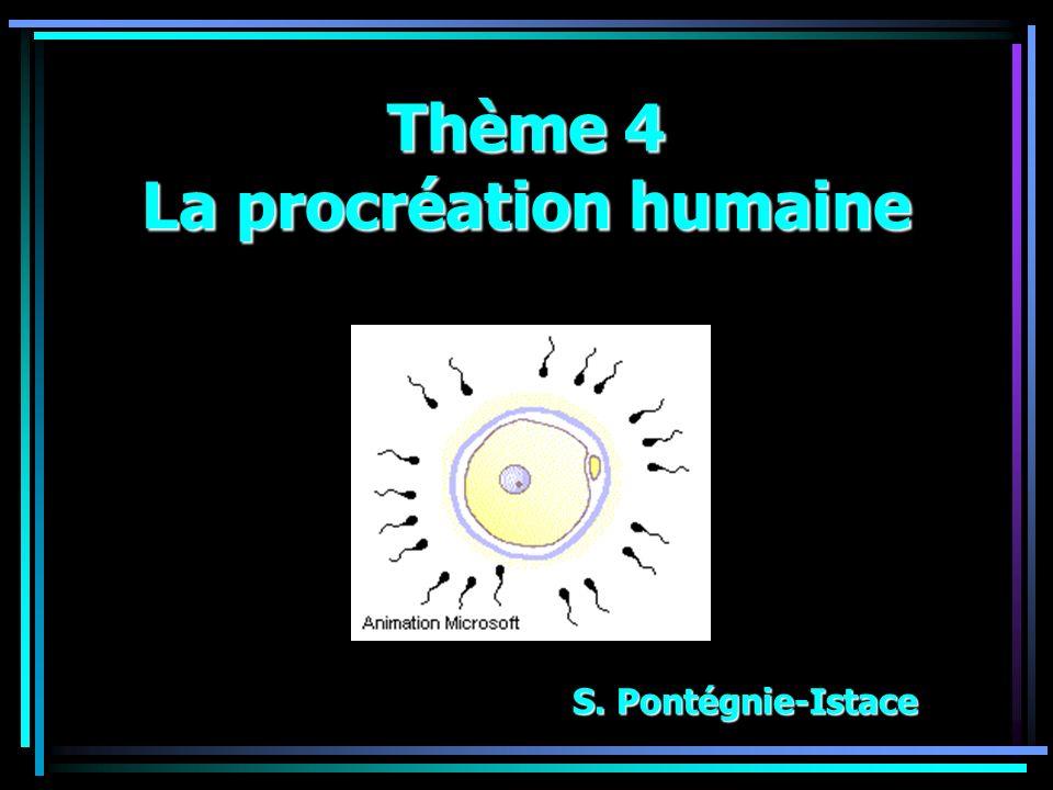 Thème 4 La procréation humaine