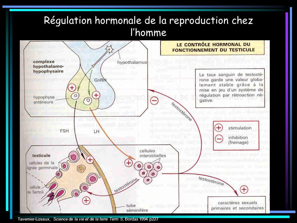 Régulation hormonale de la reproduction chez l'homme