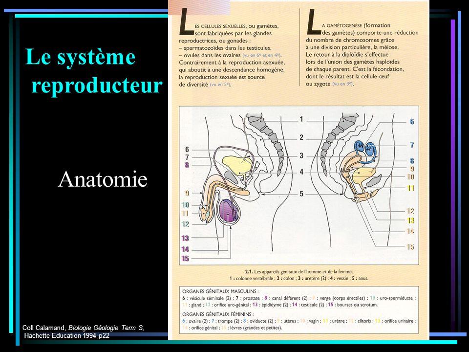 Parturition Le système reproducteur Anatomie