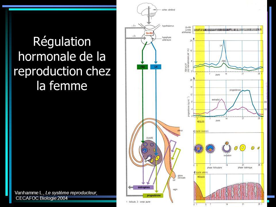 Régulation hormonale de la reproduction chez la femme