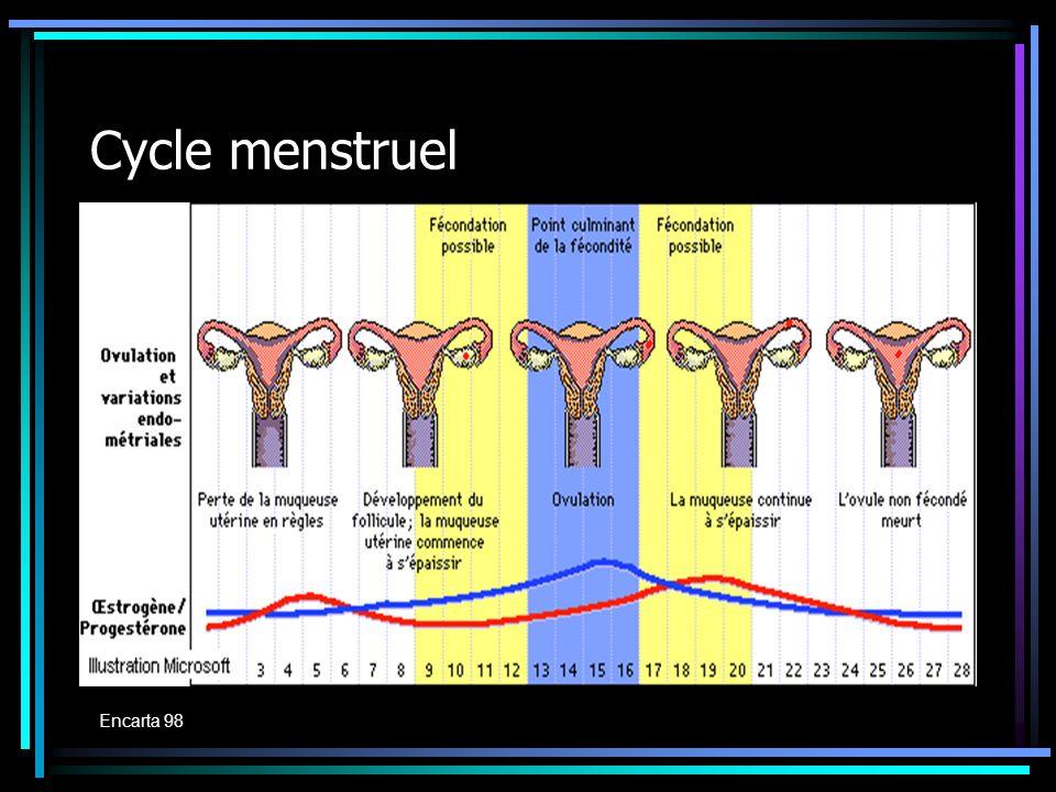 Cycle menstruel Encarta 98 Encarta 98
