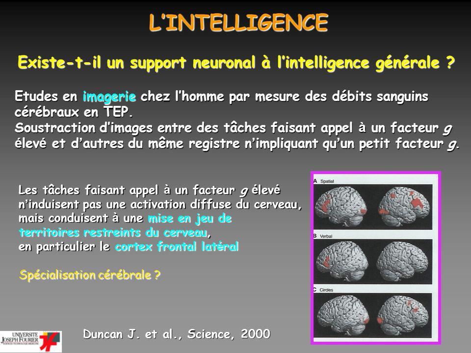 L'INTELLIGENCE Existe-t-il un support neuronal à l'intelligence générale